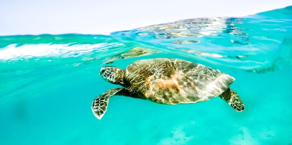 החיים המדהימים מתחת למים