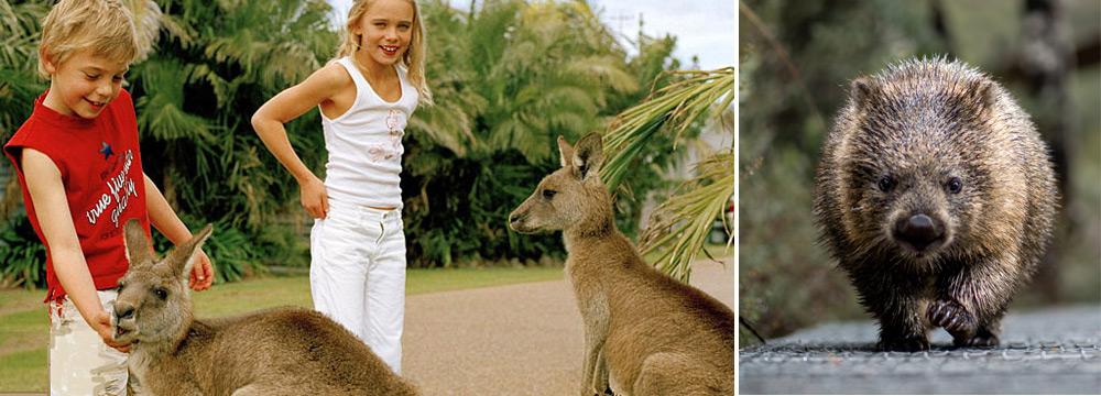 חיות בר באוסטרליה שהילדים יאהבו