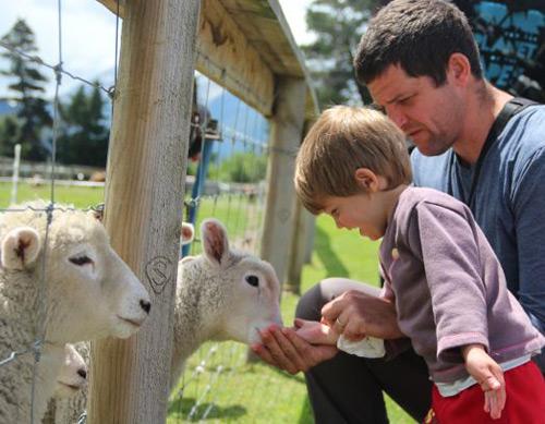 בניו זילנד יש פי 6 כבשים מאשר בני אדם