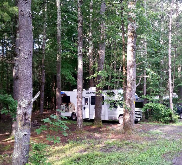 חנייה ביער עם קרוואן גדול