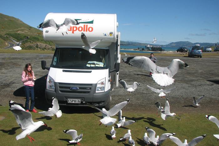 טיול משפחתי עם קרוואן בניו זילנד דרך מוטורהום