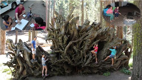 עץ סבוך