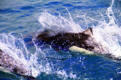 לוויתנים באלסקה